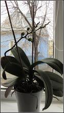 Photo: Orhidee in revenire - din Turda, Calea Victoriei, din fereastra mea - 2019.03.04