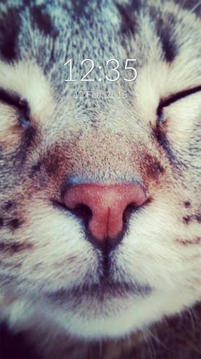 Cat Selfie Wall Lock