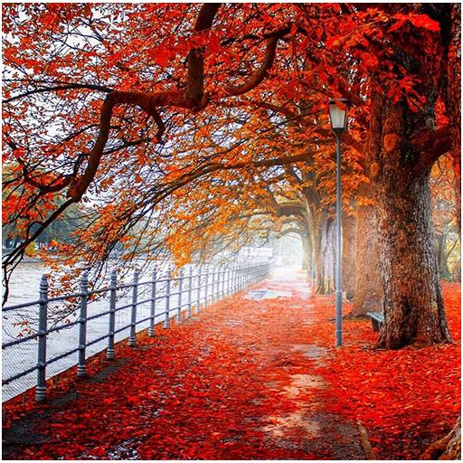 Wallpaper Autumn 4k Nature Backgrounds Apps Op Google Play
