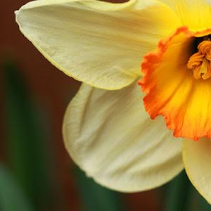 OrangeyFlower2.jpg