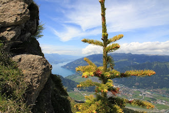 Photo: In the distance, lake Thun.