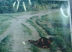 o soldado matou a tiro uma crianca, ela deveria ter uns 2 anos de idade; o irmao mais velho se joga em cima do corpo, e em seguida é executado tambem.