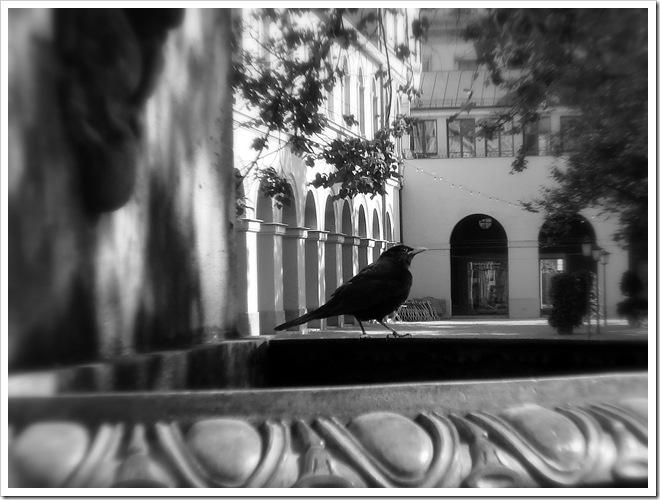 passarinho-bebendo-agua