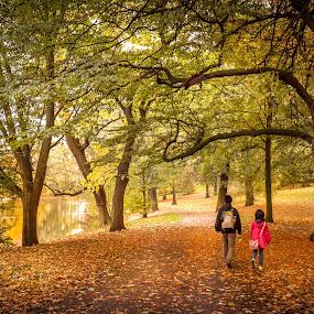 Walked through Park by Anita  Christine - City,  Street & Park  City Parks ( citypark, nature, autumn, bremen, green, germany, yellow, garden,  )