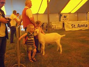 Photo: Rubriek 1: witte lammeren geboren tussen 25-2 en 9-4 2013.  Anneke 10 vd Vriendsenhof.