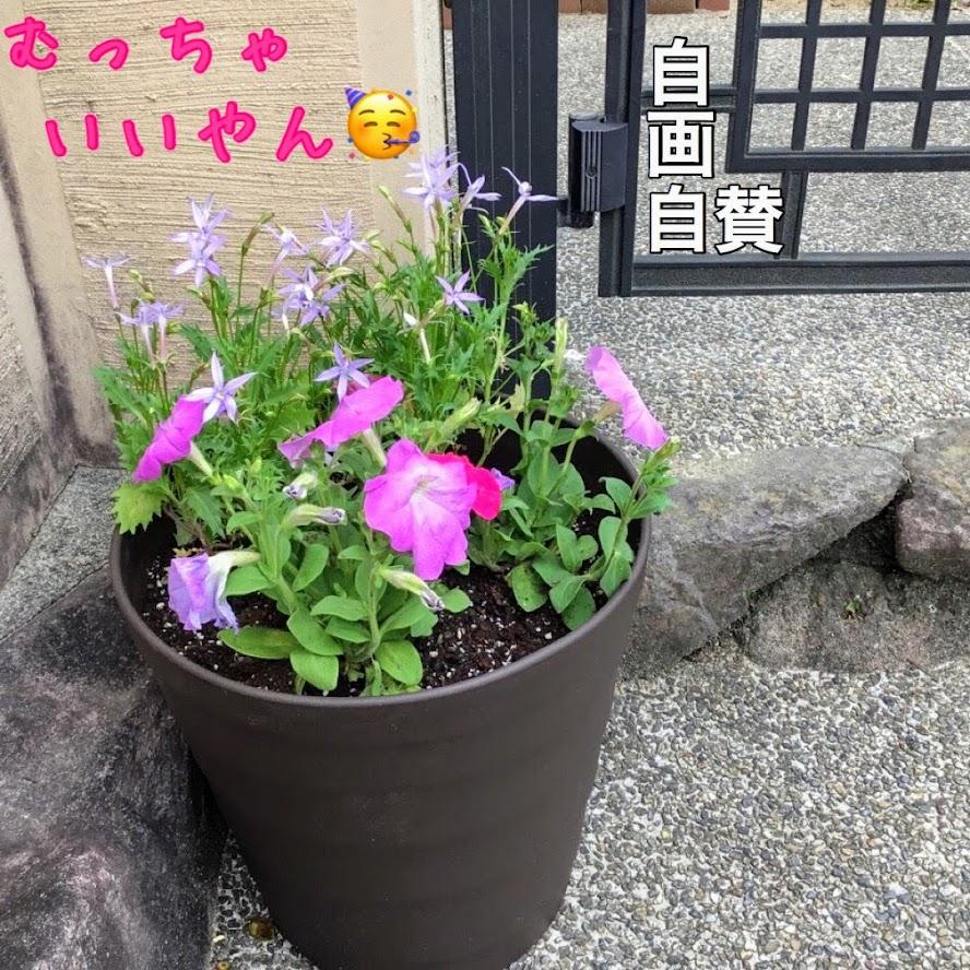 門扉のところに、寄せ植えの鉢