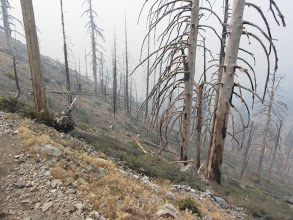 Photo: Heading south on Windy Gap Trial among dead trees and smoke