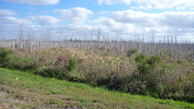 Photo: Sawgrass, farm and swamp land