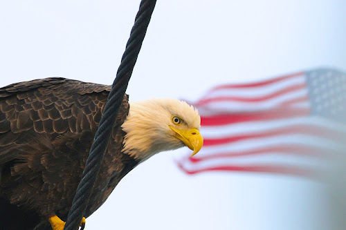 Watch by Capt Jack - Public Holidays July 4th ( amazing, fishing alaska, flight, wow, eagle, alaska, raptor, bering sea, bald eagles, birds, patriot )