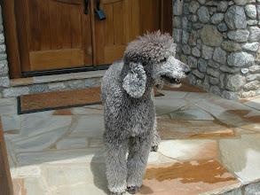 Photo: Customers Pet Pics By Pressure Washing Charlotte