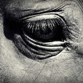 by Milica Đorđević - Animals Horses