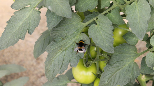Unas jornadas para la sostenibilidad y producción libre de pesticidas