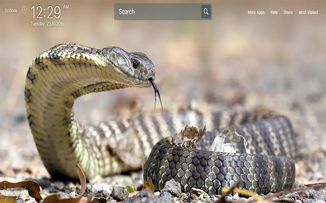 Snakes Wallpapers for New Tab
