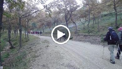 Video: photos JP