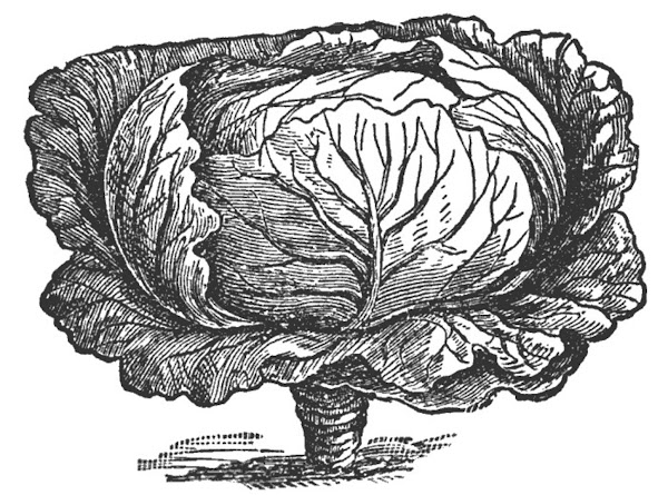 Fried Cabbage Recipe