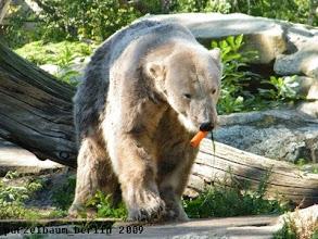 Photo: Knut hat ein Moehrchen gefunden :-)