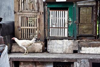 Photo: Les poules, c'est cool.