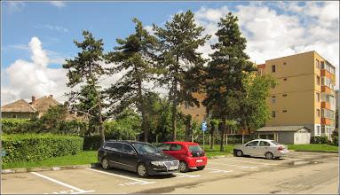 Photo: Pin negru (Pinus nigra) - din Turda, pe Str. Aviatorilor, spatiu verde - 2019.05.21