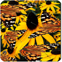 Butterfly Live Wallpaper LWP icon