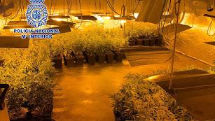 Una de las plantaciones encontradas por la Policía Nacional.