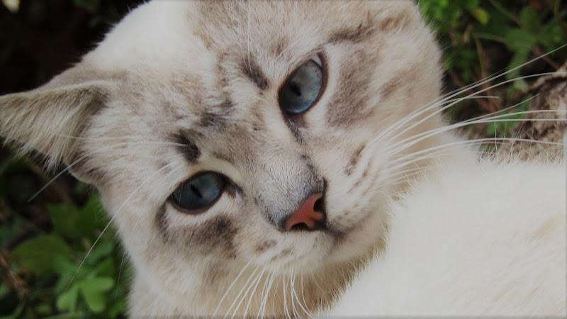 occhi color costellazioni astrali di nora96