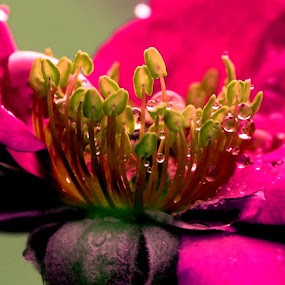The Inner Beauty by Sanjeev Leihao - Nature Up Close Flowers - 2011-2013