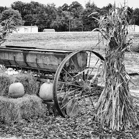 Pumpkins & Hay by Grady  Welch - Black & White Objects & Still Life ( hay, pumpkins, b&w, white, black, black and white )