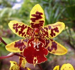 Orchideenarten