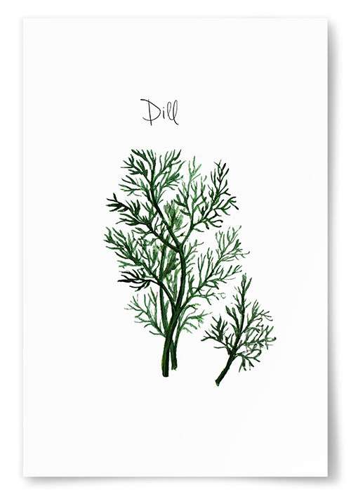 Poster Dill