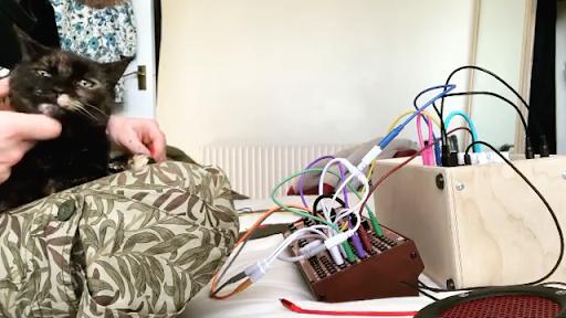 Eurorack Improvisation with Cat