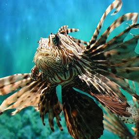 Lion Fish by Dean Thorpe - Animals Fish