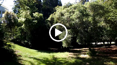 Video: Taken through Glass
