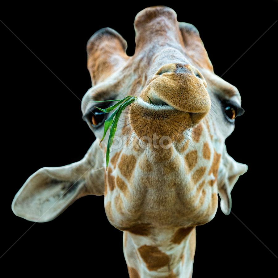 by Judy Rosanno - Animals Other Mammals ( march 2018, san antonio zoo, spring,  )