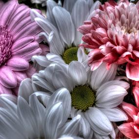 Bouquet by Simon Eastop - Nature Up Close Flowers - 2011-2013 ( colour, bouquet, macro, flowers, closeup )
