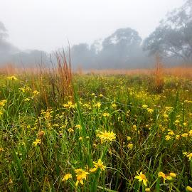 Flowers In The Fog by Geoffrey Wols - Flowers Flowers in the Wild ( field, grass, yellow, cry, trees, fog, flower,  )