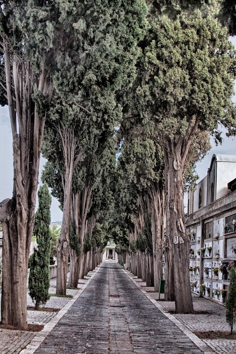 Il viale del silenzio di Fiorenza Aldo Photo