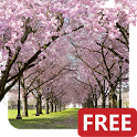 Spring Cherry Blossom Live Wallpaper FREE icon