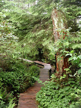 Photo: Forest boardwalk