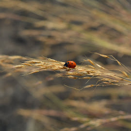 Little Angel by Neeraj Sharma - Animals Insects & Spiders (  )