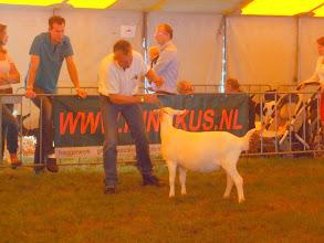 Photo: Rubriek 6: witte lammeren geboren tussen 10-2 en 11-3-2012. 1b. Maisy 33.