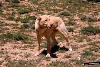 Photo: 12: Un asustado perro pastor se acercó a ver si nos sobraba algo.