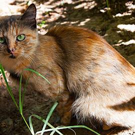 BEADY EYED by Nihan Bayındır - Animals - Cats Playing ( love, cat, friends, friendship, photography, animal,  )