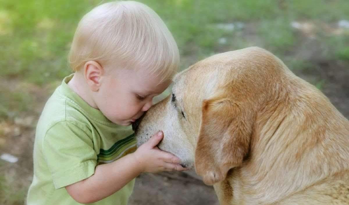 A Lição do Cachorro