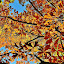 Autumn Leaves by Thomas Barr - Nature Up Close Trees & Bushes