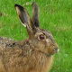 Download rabbit video wallpaper - green grass wallpaper For PC Windows and Mac