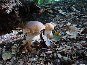 Photo: Ideał dla grzybiarza