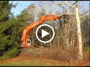 Video: Video clip 1:17 minutes. 12-26-2011. Tree removal begins at 9:00 am