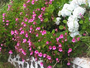 Photo: Цветы/More flowers