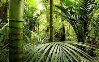 Screenshot of Jungle Live Wallpaper