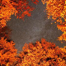The Sky Above Us by Ovidiu Gruescu - Uncategorized All Uncategorized